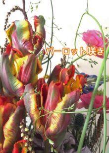 オウムを意味するパーロット咲き