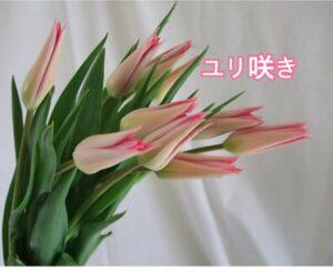シュッとしたスタイリッシュな咲き方